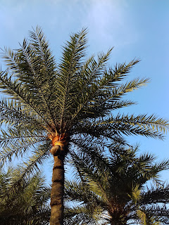 Palm tree with pot