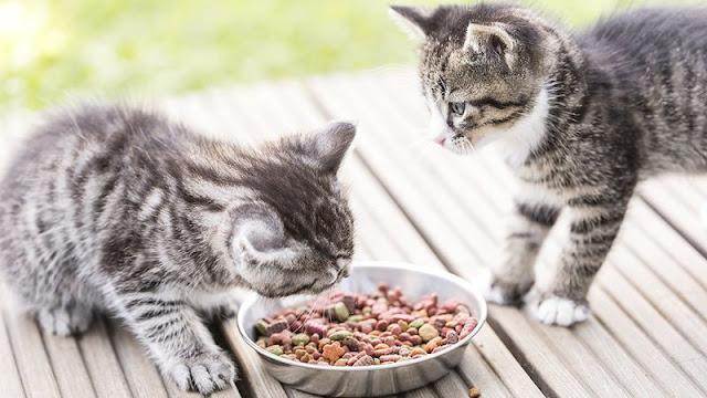 nourriture-chaton-3-mois