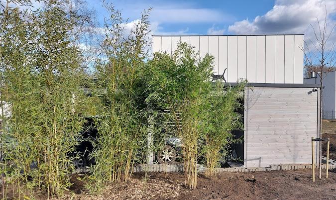 ogród bambusowy