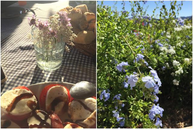 Sommerblumen Mallorca Flower Power Bloggers