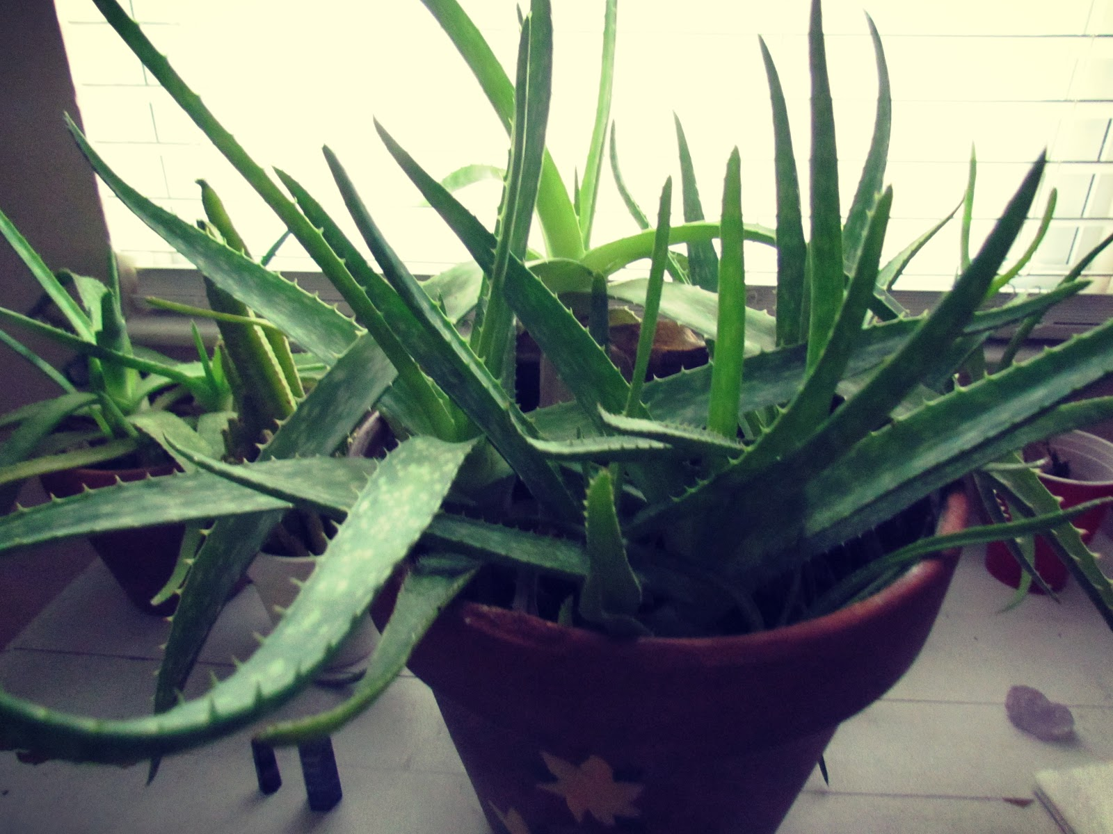 Green Plant Life on a Table in the Wintertime + Healing Plant Energy + Green Therapy