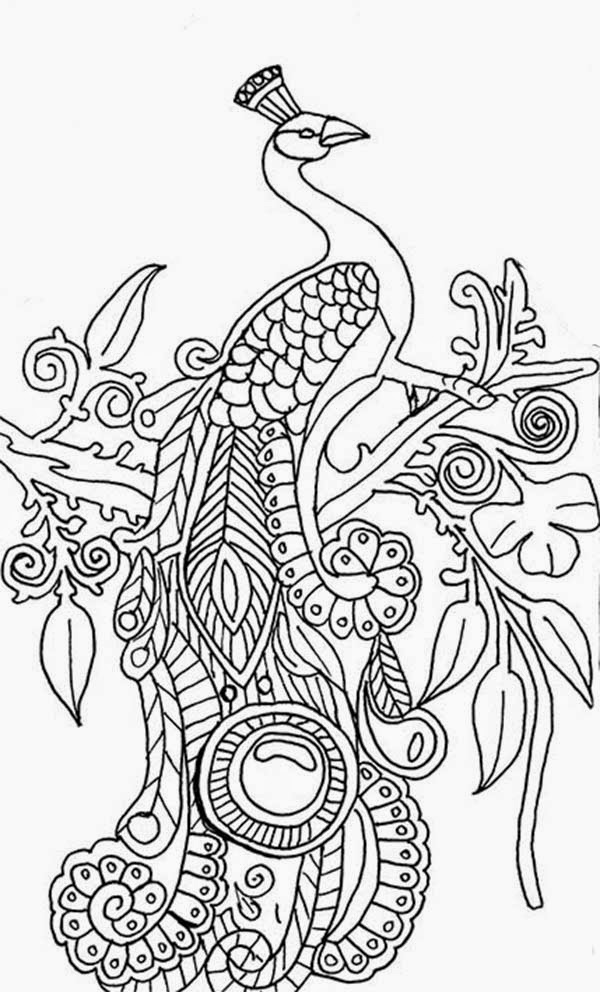 Peacock coloring pages ~ Patamata Praneel: READY TO PRINTABLE PEACOCK COLORING ...