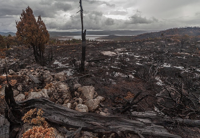 Tasmanian bushfires raze ancient World Heritage forests