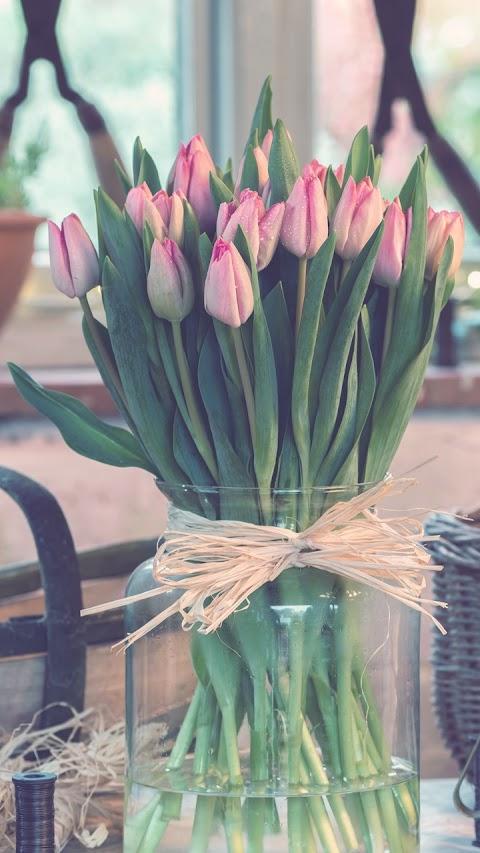 Chậu hoa tulip