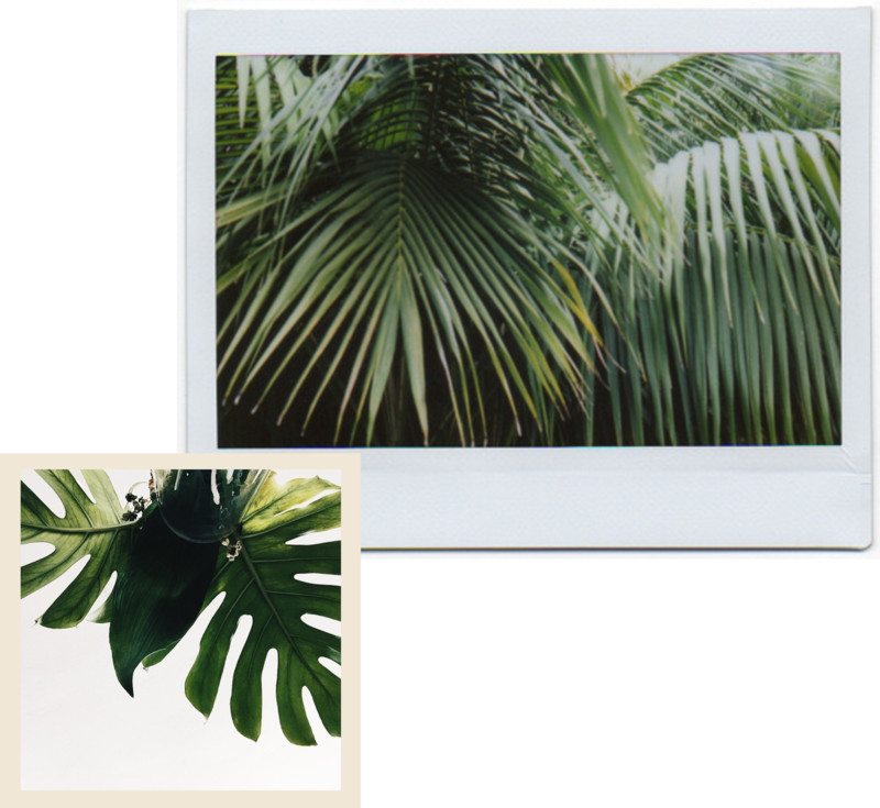Leaves Palm Fronds Monstera Inspiration Green Plants