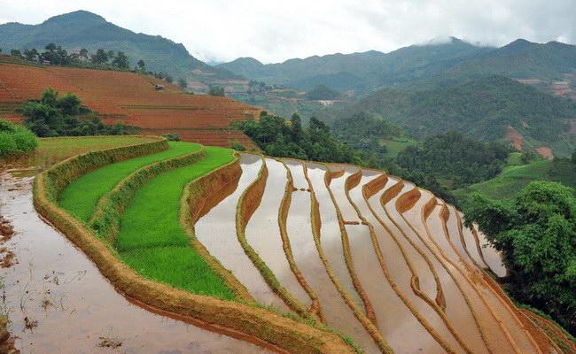 www.xvlor.com Mu Cang Chai terraced fields