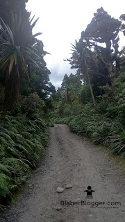 the walk path in the Taranaki mountain