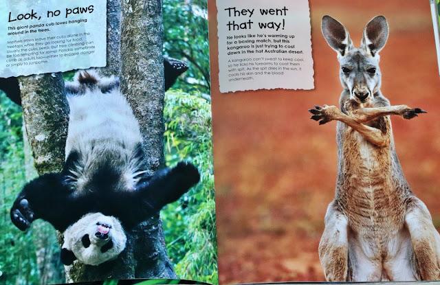 animal antics book