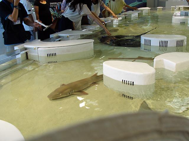 Osaka Aquarium Haie streicheln