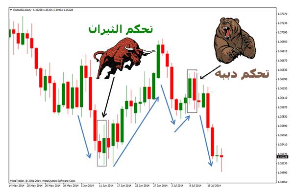 شرح معنى الدببة Bears والثيران Bulls في تداول العملات الرقمية