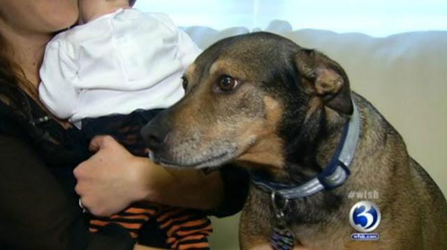 Собака из приюта спасла 9-недельного ребенка хозяев!