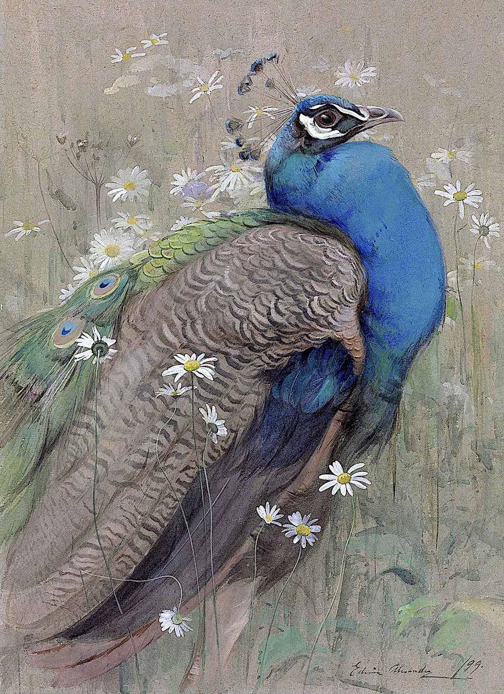 Edwin John Alexander art 1899, a large blue bird in a wild field with daisy flowers