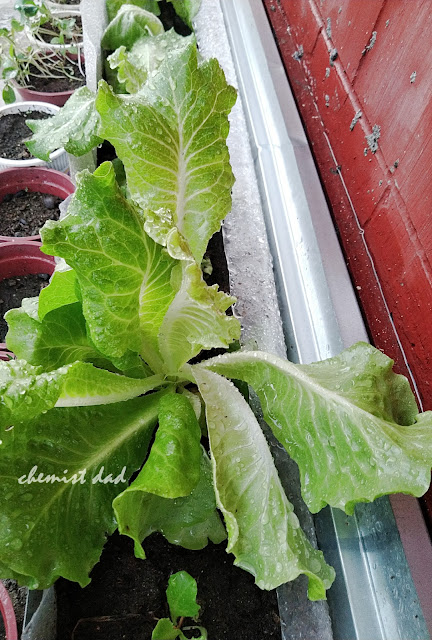 tips on urban gardening, urban gardening, gardening, organic farming, organic vegetables, home and living, home,