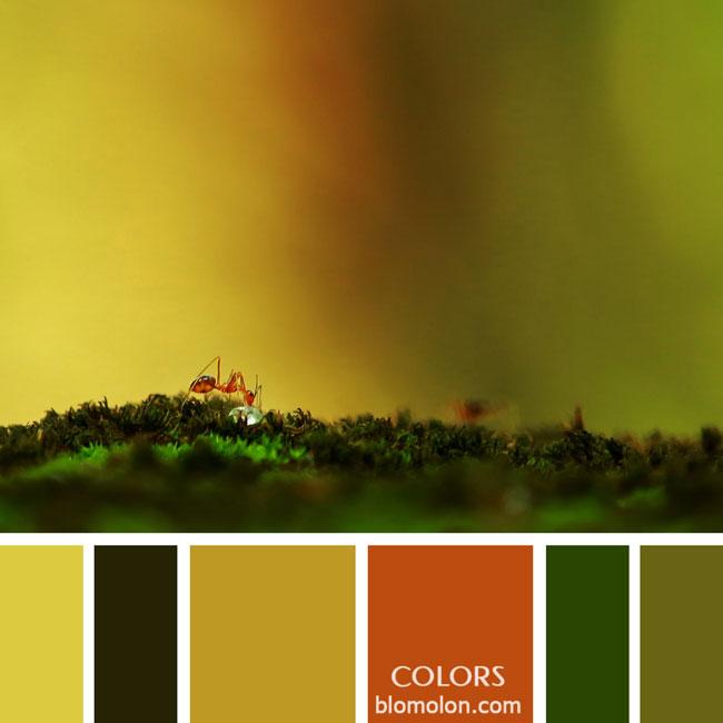 variedad_en_color_paletas_colores_3b