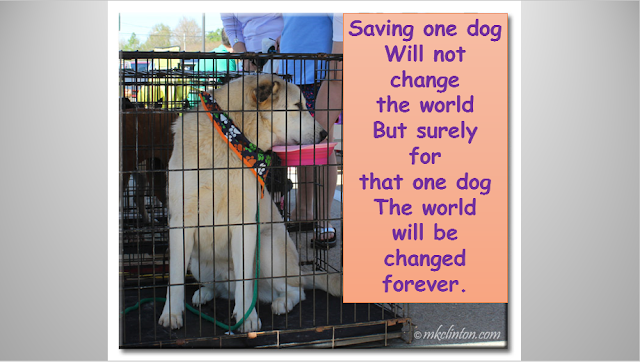 Shelter dog in cage with saving one dog quote