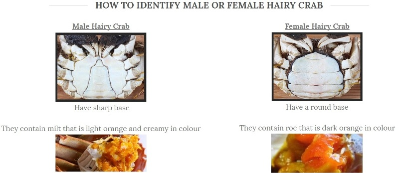 how to identify male hairy crabs from female