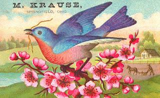 bird vintage advertisement image