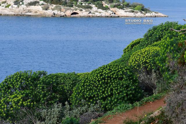 """Μίνι καλοκαιράκι στην καρδιά του Χειμώνα - Η φύση """"ξελογιάστηκε"""" στο Ναύπλιο"""