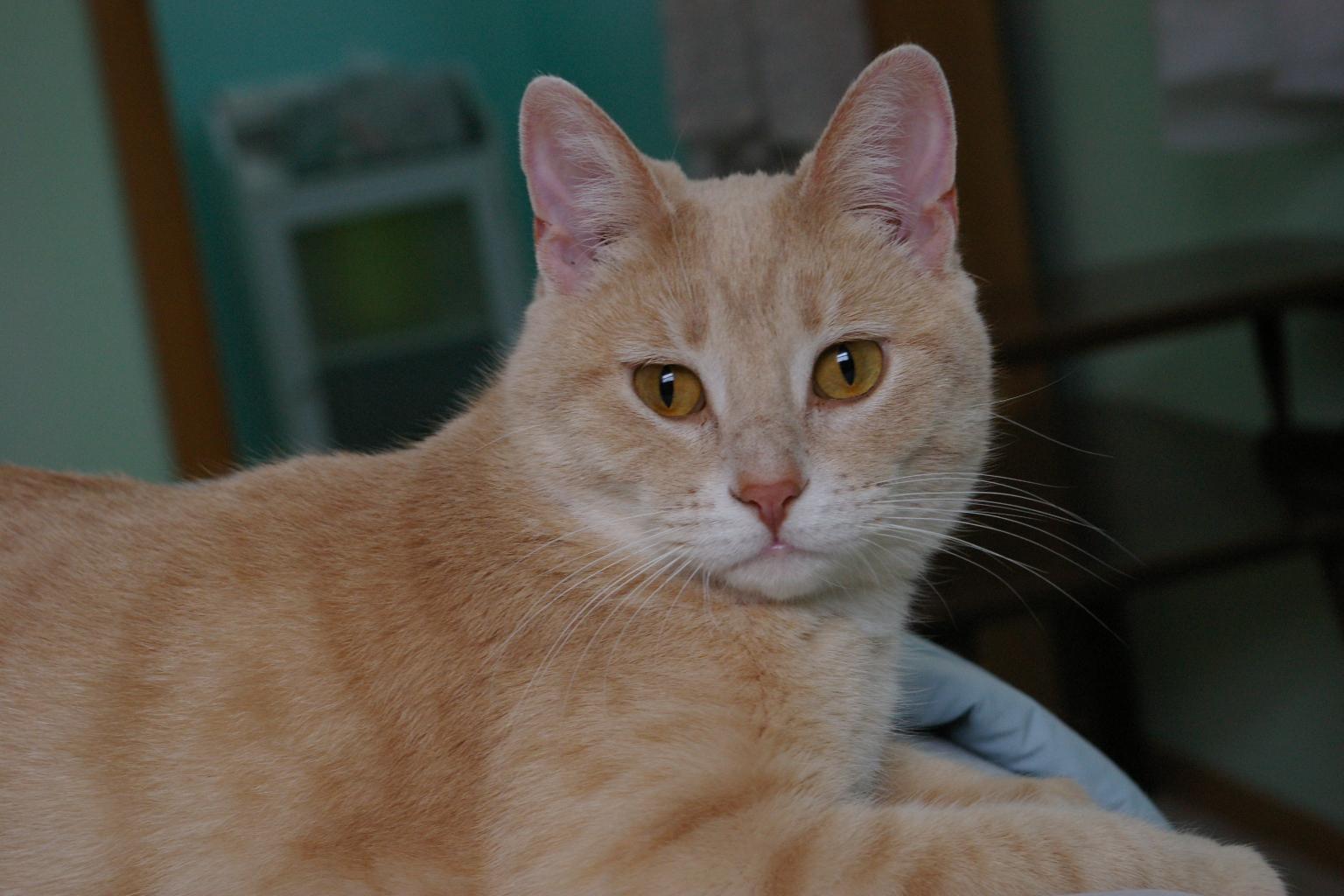 Nip Cat Ears For Neutering