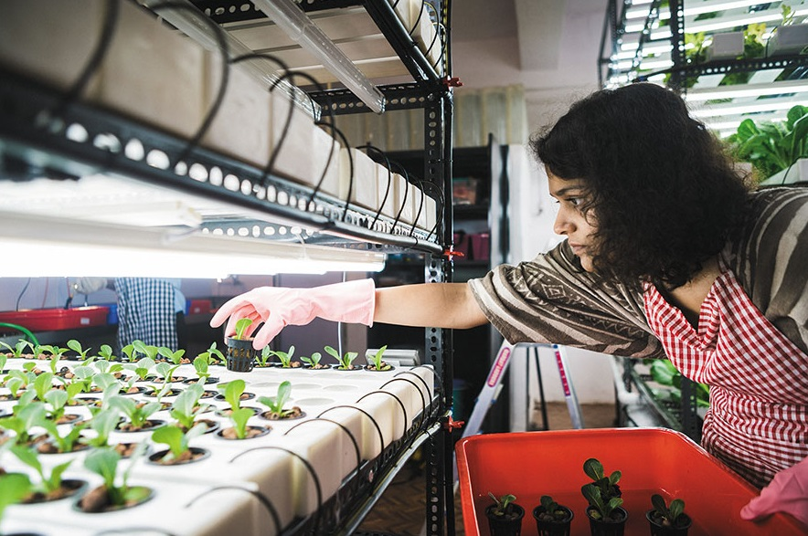 Disadvantages of hydroponics: A researchers negative side for Hydroponics