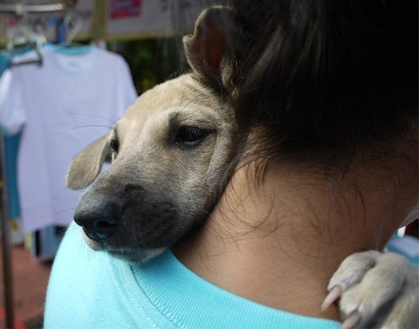 Собака на руках человека фото