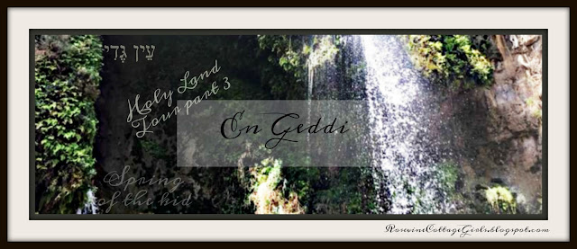 En Gedi photo of the waterfall at Ein Gedi