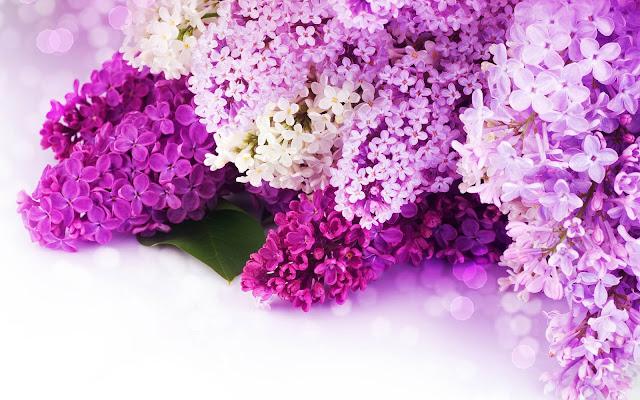 Foto van mooie roze en paarse bloemen