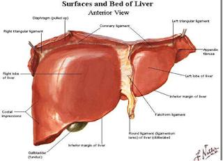 Ce unguent este potrivit pentru stadiul inițial al varicelor