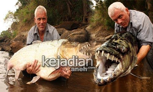13 Ikan Raksasa Berwajah Paling Seram