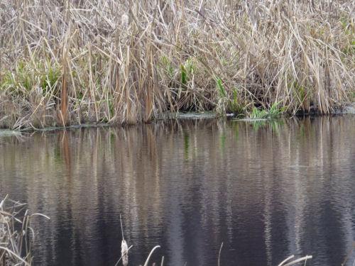 pattern in water