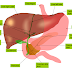 Information and facts about liver in Hindi - लीवर के बारे में जानकारी और रोचक तथ्य