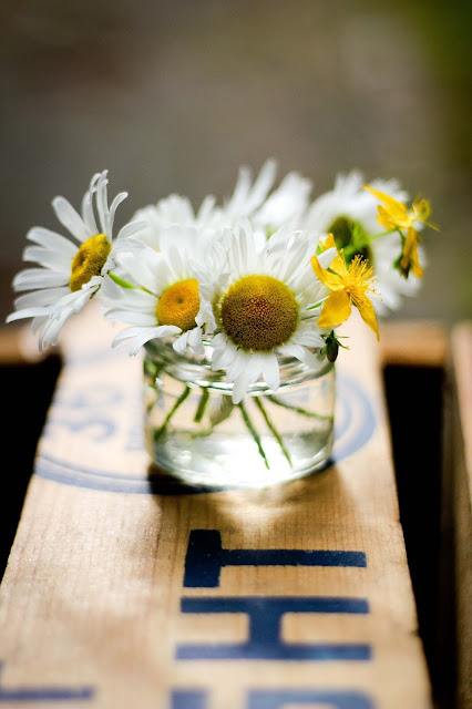 petit,bouquet,marguerites,fleurs,photo,emmanuelle-ricard