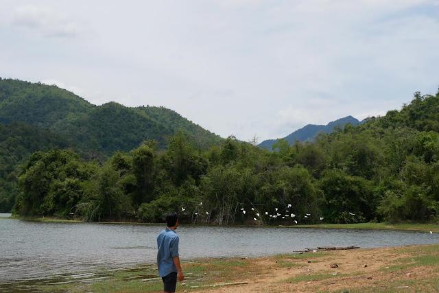 ป่าละอูเป็นแหล่งอาศัยของนกหลากลายชนิดๆ