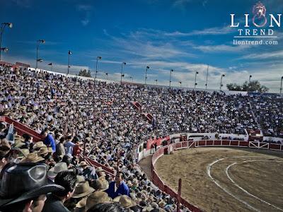 toros, torero, corridas