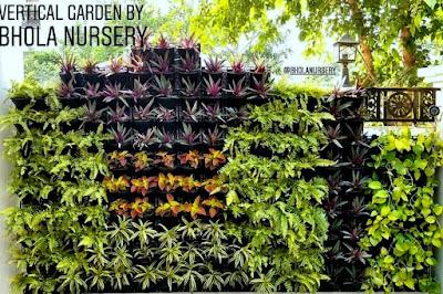 semi shade vertical garden