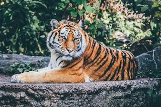 Kumpulan Nama Binatang Dalam Bahasa Sunda Terlengkap