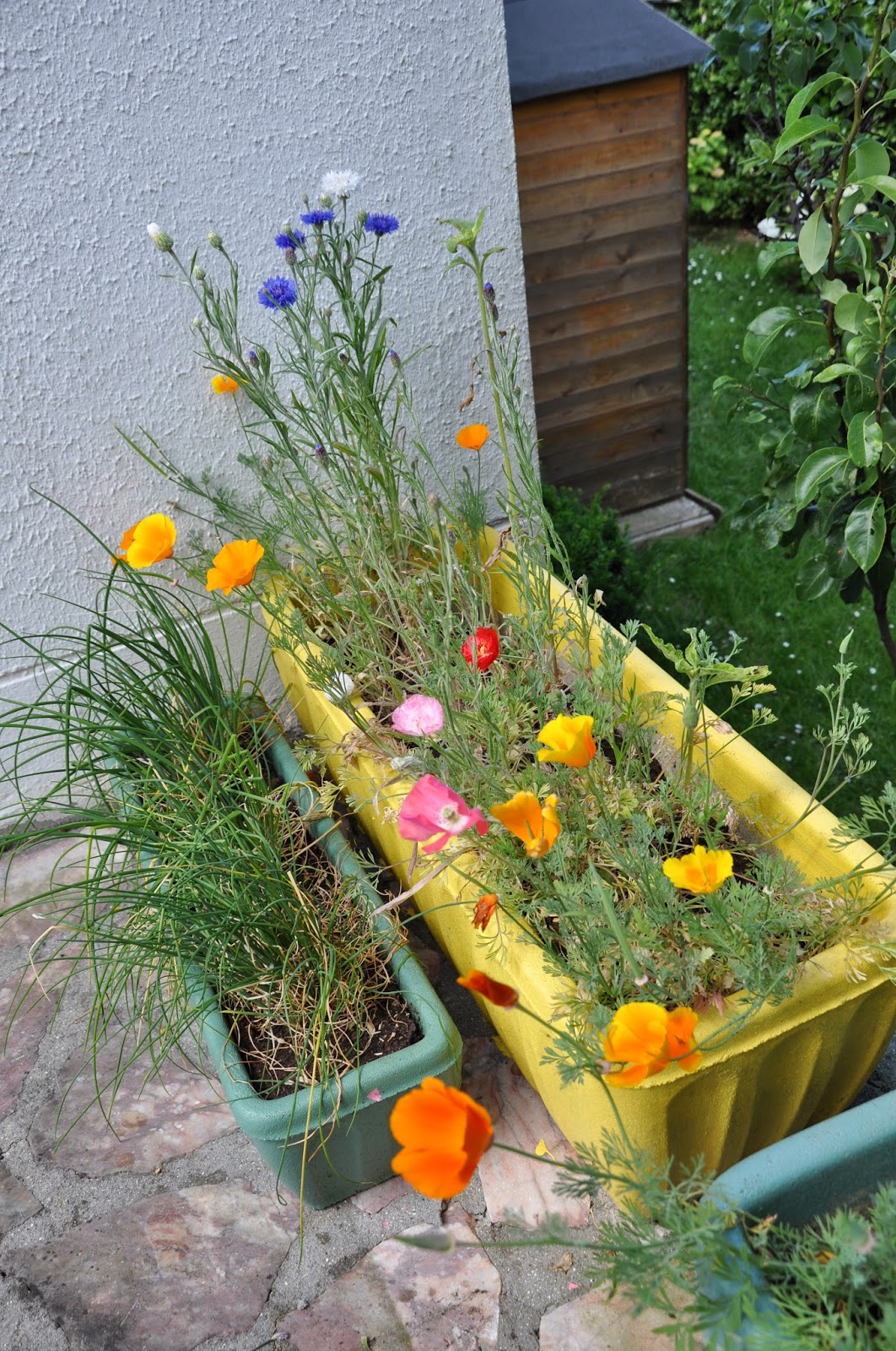 les passions de viedefun 36 15 ma vie les fleurs de mon jardin. Black Bedroom Furniture Sets. Home Design Ideas