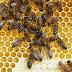 Παγκόσμια Ημέρα Μέλισσας Όλοι εξαρτόμαστε