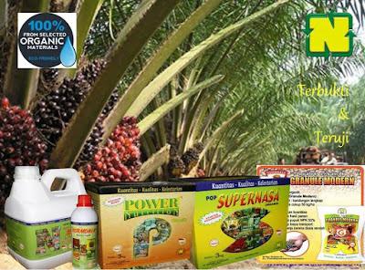 Cara Sukses Perkebunan Sawit Nasa