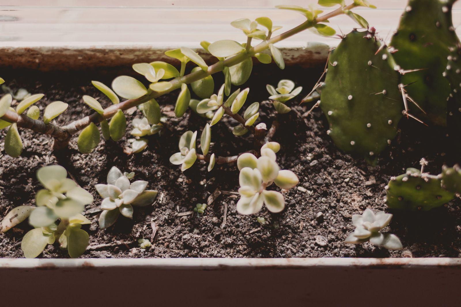 Adoradores de plantas | Houseplant jungle suculentas