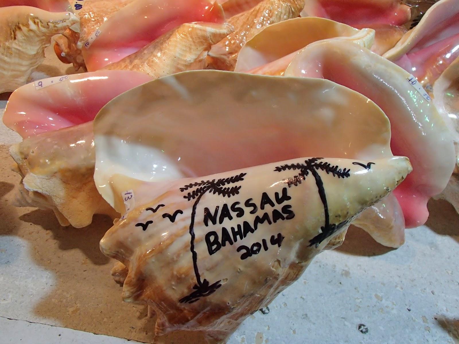 Nassau conch shells