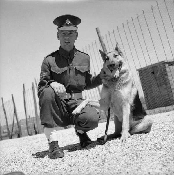 Corporal A Wilde with his German Shepherd dog