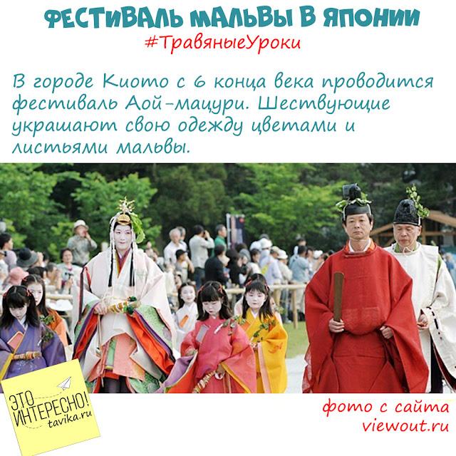 фестиваль мальвы в Японии