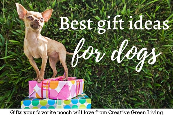 best gift ideas for dogs featuring a chihuahua and presents