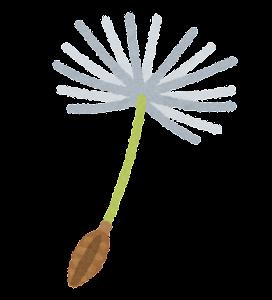 たんぽぽの綿毛のイラスト(1本)