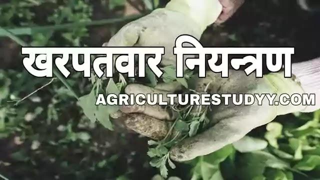 खरपतवार (kharpatwar) क्या है, खरपतवार की परिभाषा, kharpatwar kise kehte hain, weed in hindi, खरपतवारों की विशेषताएं, खरपतवार नियंत्रण की विधियां, weed