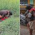 Bata sa Northern Samar, Natagpuang Wala ng Buhay ng Kanyang Ama Matapos Maka-Apak ng Live Wire sa Bukid