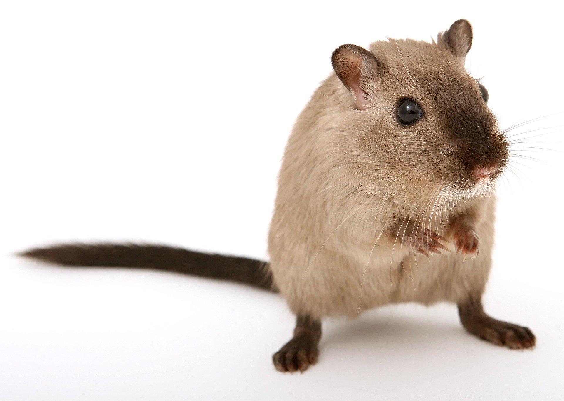 mouse, stevie wonder story,