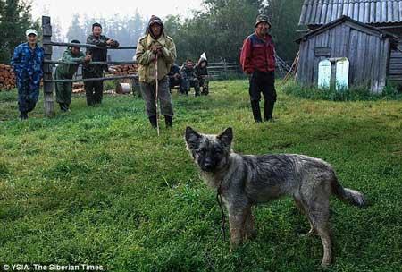 Bocah Bersama Anjingnya Bertahan Hidup Di Hutan