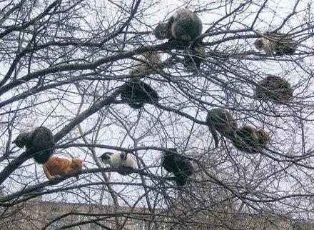 Funny Cat Tree Branch Joke Picture